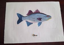 Dan Mitra Colored Fish Etching White Bass Fly Fishing Art Print Limited 101/350