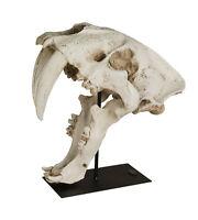 Säbelzahn Tiger Schädel Urzeit Tier Raubkatze Skelett Kopf Skull Deko Dino Figur