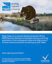 RSPB Pin Badge | Water Vole | Rainham Marshes reserve [00948]