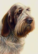 More details for nigel hemming just dogs - brown roan italian spinone 1 - spinoni gun dogs print