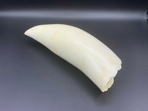 whale tooth,made plastic, copy 17 cm