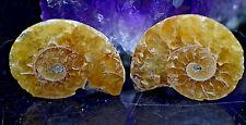 """1"""" Cut Sliced Ammonite Iridescent Fossil Specimen Nautilus 6.9 Grams NUM21"""