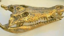 large Crocodile skull solid 100% brass large heavy decoration stunning 50cm B