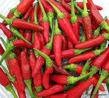 Bird Eye Chilli Hot Pepper Seeds, House Plant, 10 Graines-liveseeds