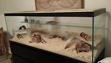 """Hamster , Gerbil, Mice Tank with lid and shelf and ladder - 48"""" x 18"""" tall X 15"""""""