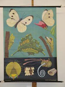 Jung Koch Quentell Tierbild Kohlweißling 1971 Schulwandbild Wandbild 82x112cm