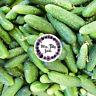 Kleine russische Gurke RUSSO Gurkensamen 10 milde knackige Sorte robust Samen