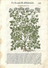 Stampa antica ERBARIO MATTIOLI MATTHIOLI CERFOGLIO botanica 1568 Antique print