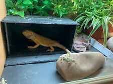 xxl slate reptile lizard dragon tortoise hide out basking fish aquarium