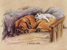 BOXER DOG AND SLEEPING CAT CHARMING GREETINGS NOTE CARD