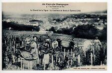 CHAMPAGNE CPA 51 théme Vins Vignes EPERNAY vue sur la cueillette du raisin