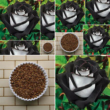 200Pcs Semillas Rosas Blanco&Negro Flores Planta Jardín Raro Rose Seeds Flowers