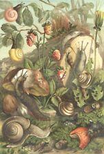 MOLLUSCS. Land molluscs 1896 old antique vintage print picture