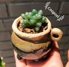 A set of 5 your-pick pots for succulent, cactus, lithop, bonsai, echeveria
