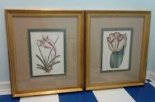 WIILLIAM CURTIS PRINTS Cape Coast Lily & Garden Tulip Nicely Matted and Framed