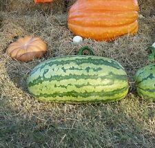 186 lb giant watermelon seeds - Carolina Cross