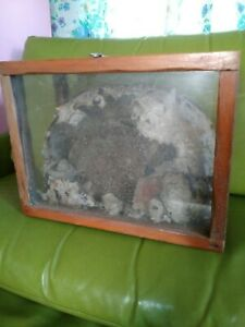 VTG Paper Wasp Hornet Nest Bee Hive Taxidermy Wasp Bees House Display case
