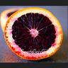 50 PCS Seeds Moro Orange Blood Red Blood Orange Garden Fruit Tree Bonsai Plants