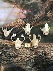 Real 5 BADGER Skull Top Animal Mount Unique Gift Present Jewelry Teeth Art Craft