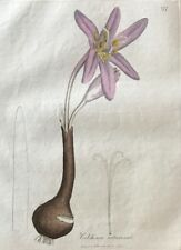 Sowerby Colchicum Autumnale. Crocus. 1792 Hand Colored Engraving Woodville.