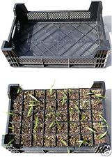 Staudenkiste Pflanzenkiste für Anzuchttöpfe-Pflanztöpfe
