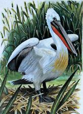 PELICAN DE ROUMANIE   WWF Birds OISEAU  ENVELOPPE  Premier Jour 1°  FDC 3234