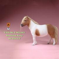 Mr.Z 1/6 Shetland Pony Horse Figure Animal Model Collector Decoration Colt Toys