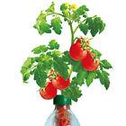 PETomato™ Hydroponic Tomato Plant Growing Kit ASI9810 by Kagan