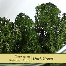 Dried Reindeer Moss | Dark Green - Perfect for air plants, terrariums & Crafts