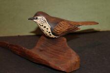 Wood Thrush Song Bird,