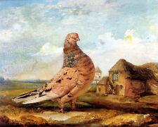 James Ward  - 1840  A Fancy Pigeon  - 24'  CANVAS