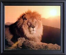 Lion King (Sunset) Big Cat Wild Animal Wall Art Black Framed Picture (19x23)
