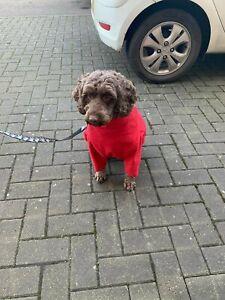 Hotterdog Equafleece Dog Jumper Fleece Water Repellent Drying Dogs Jumper Size L