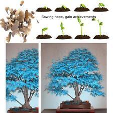 20 Graines Erable Bleu Japonais Arbre Plante Bonsaï