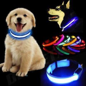 USB Rechargable LED Dog Pet Collar Flashing Luminous Safety Light Up Nylon UK
