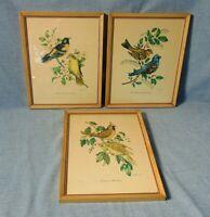 Bird Pictures Artwork By Vincent Vintage Set Of 3 Framed Lithographs Song birds