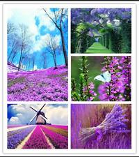 100 ALBERO LILLA//Bush semi-SYRINGA VULGARIS-BELLISSIMA e fiori profumati!