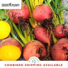 Vegetable Beetroot Detroit 2 Crimson Globe Appx 900 seeds
