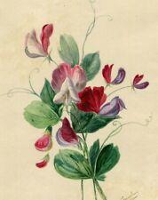 Dessin Ancien Original signé XIXème - Bouquet, Fleurs, Roses, Violette