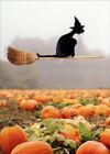 Avanti Press Black Cat Riding Broom Humorous / Funny Halloween Card photo