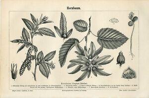 8 PRINTS LOT BOTANICAL LEAF FRUIT FLOWERS PLANTS Antique Engraving Print 1895
