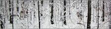 Where Paths Cross ~ Diana Casey ~ Art Print