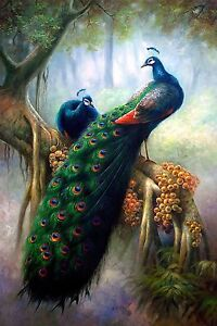 CHPT07 100% hand painted peacock Oil Painting modern Wall Decor art on Canvas