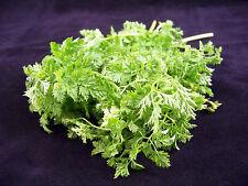 200 Brussels Winter Chervil Gourmet European Heirloom Herb Vegetable Seeds +Gift