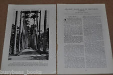1930 magazine article about BRAZIL, RIO De JANEIRO, people, history etc