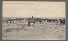 [30975] 1909 Postcard Cowboys In A Cross Section Of A Round Up, Working