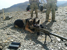 Navy Seals Well Disciplined Dog Taking Aim At Target Glossy 8x10 Photo