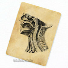 Internal Structures of Human Head #3 Deco Magnet, Fridge Antique Anatomy Medical