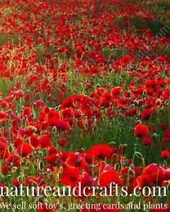 Red Poppy Seeds 20 seeds £1.25