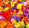 eßbare Blüten, Blumen für Salat, Kuchen, Eis, Blumensamen 200 Samen als Mischung